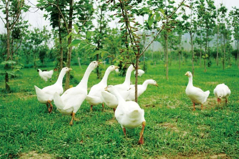 中专现代农艺技术专业就业前景